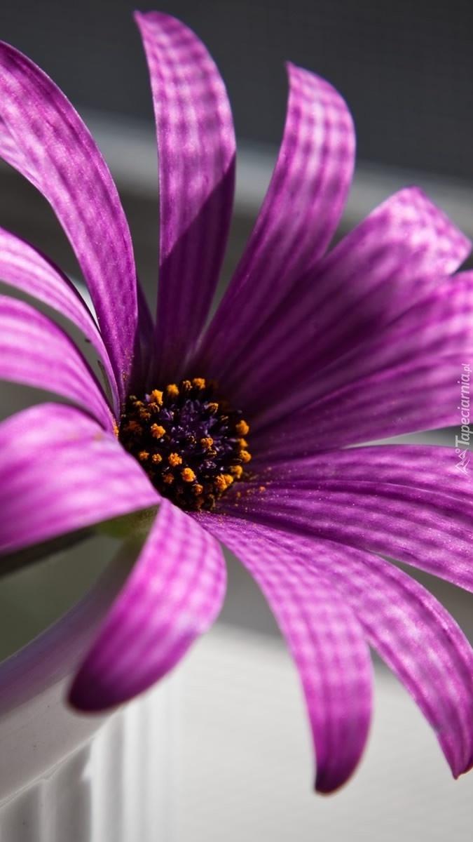Kwiatek płatki ma w kratki