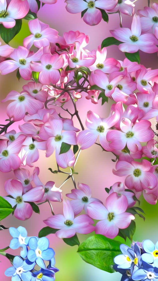 Kwiatki derenia różowego