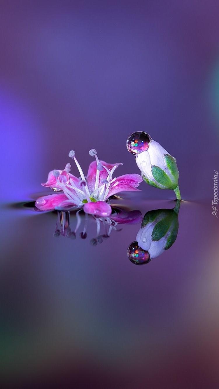 Kwiatki i kropla