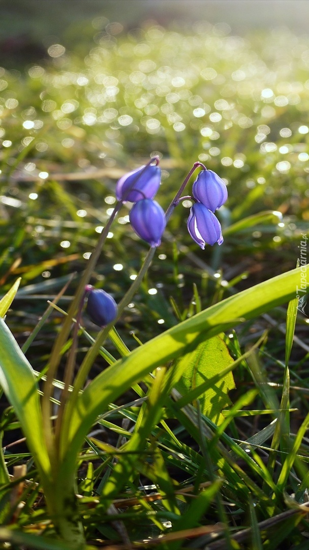 Kwiatki w zroszonej trawie