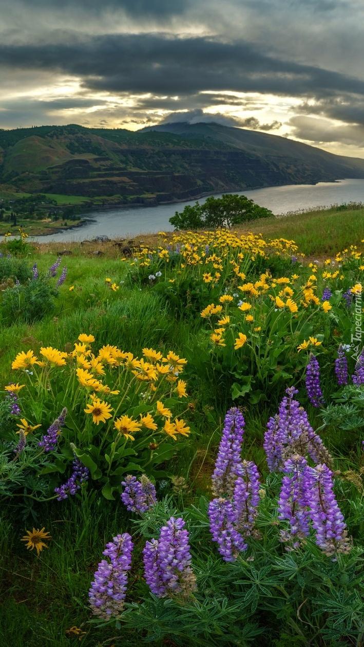 Kwiatowa łąka nad rzeką