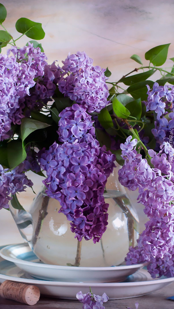 Kwiaty bzu w dzbanku na talerzu