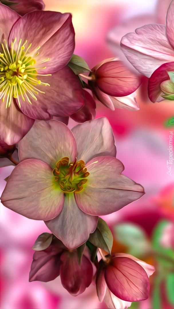 Kwiaty ciemiernika w grafice