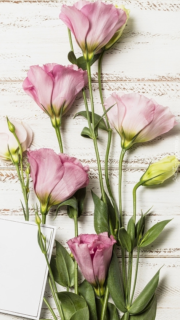 Kwiaty eustomy rozłożone na deskach