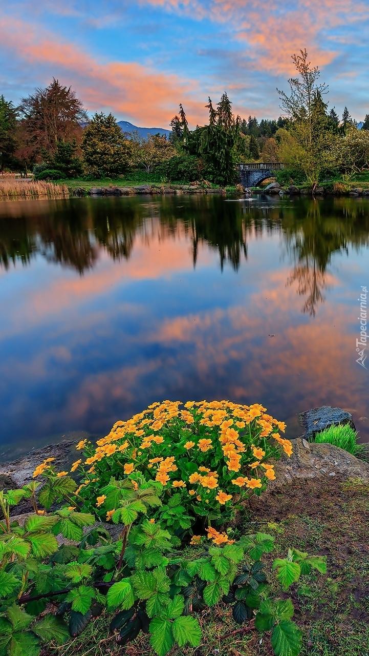 Kwiaty i drzewa nad jeziorem