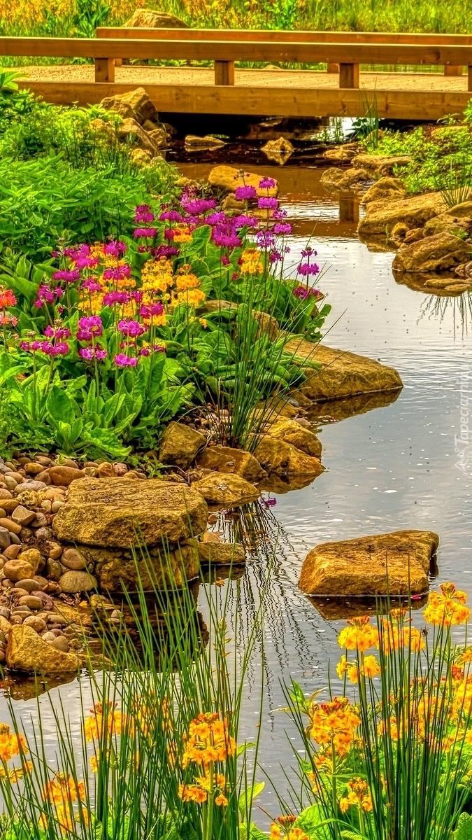 Kwiaty i kamienie nad potokiem