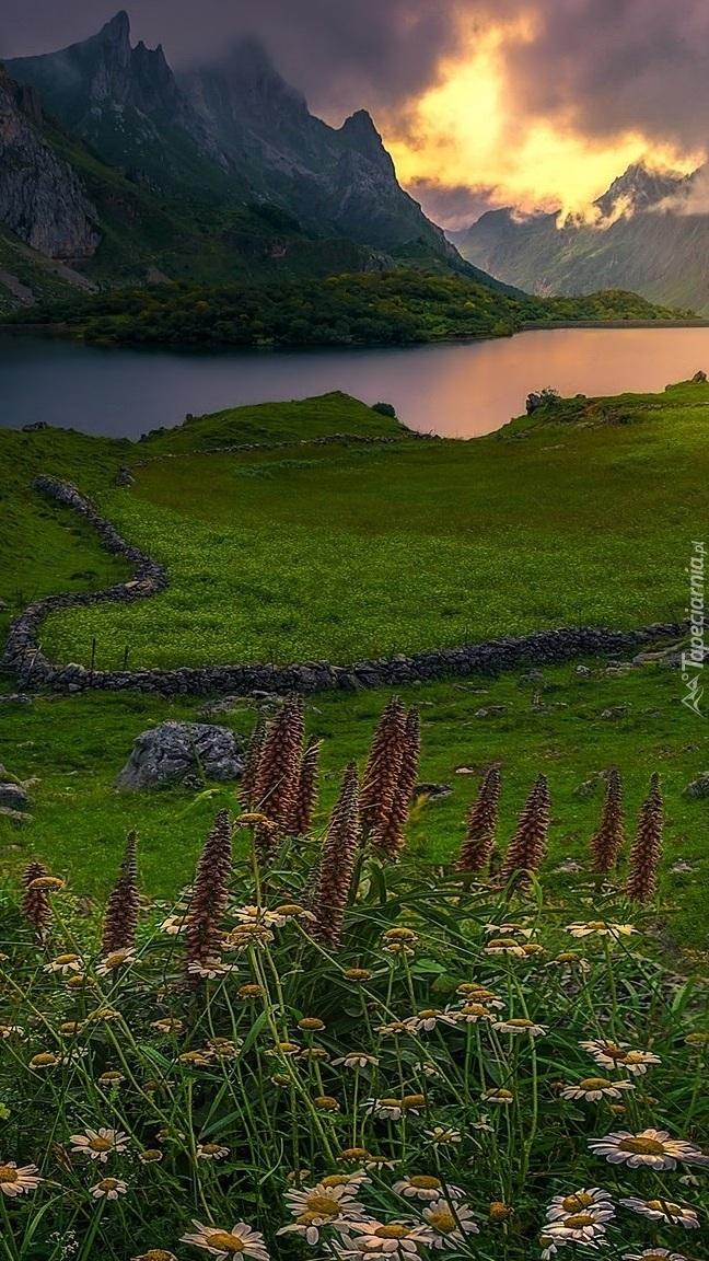 Kwiaty i łąka nad górskim jeziorem