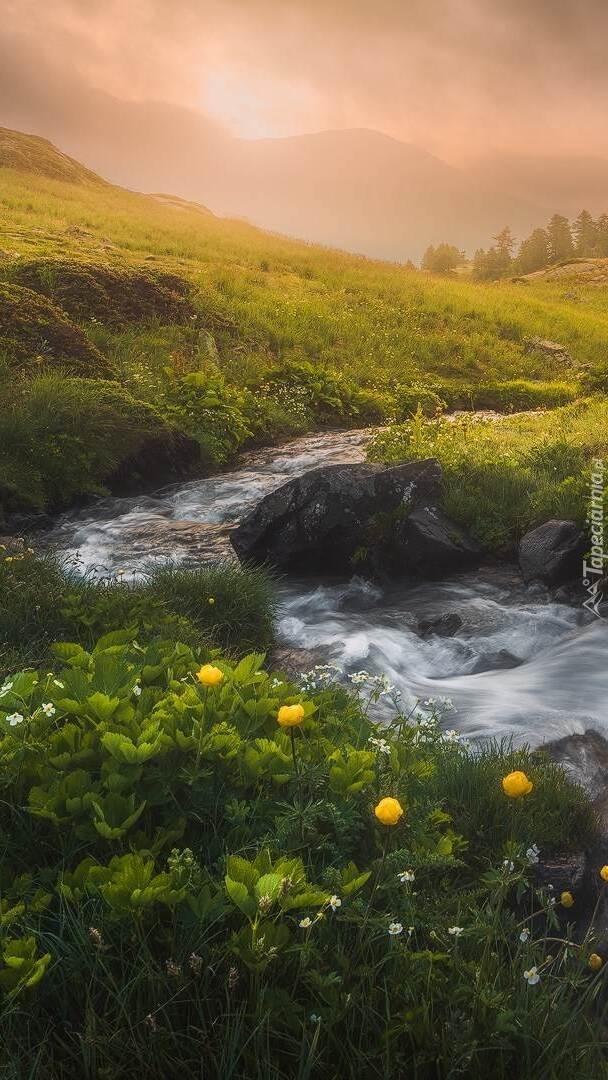 Kwiaty i rośliny na brzegu rzeki