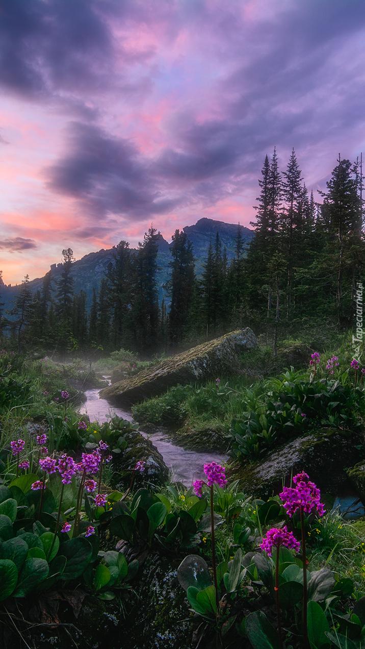 Kwiaty i skały na brzegu górskiego  strumienia
