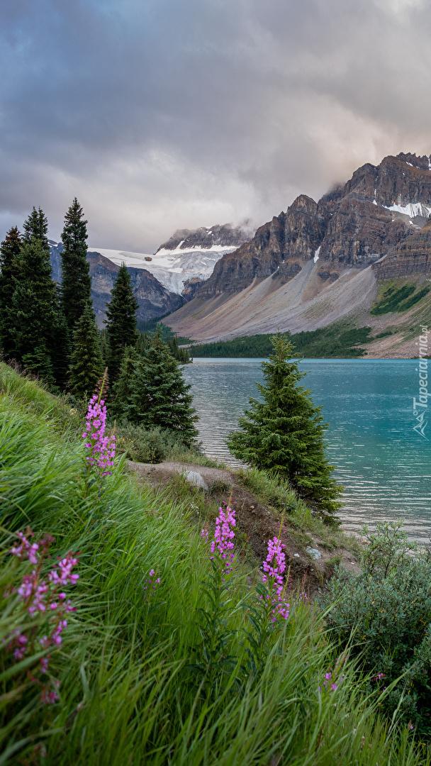 Kwiaty i świerki nad jeziorem Bow Lake