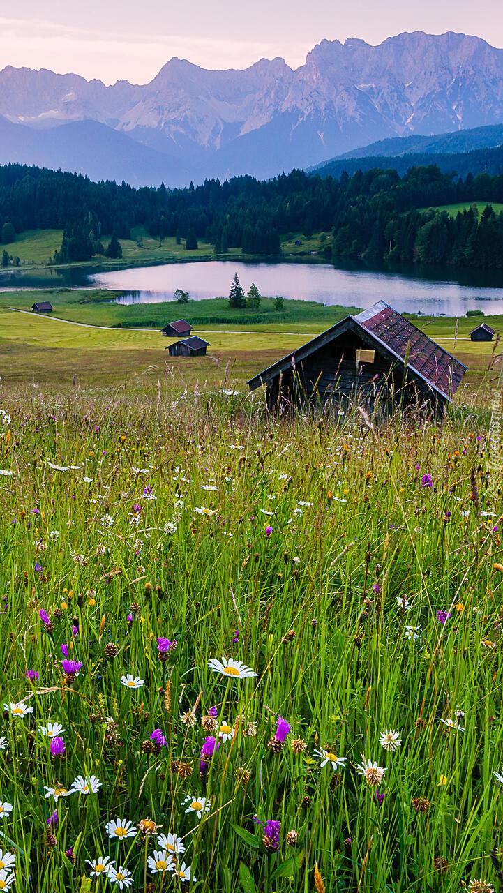 Kwiaty i szopy na łące nad jeziorem Geroldsee