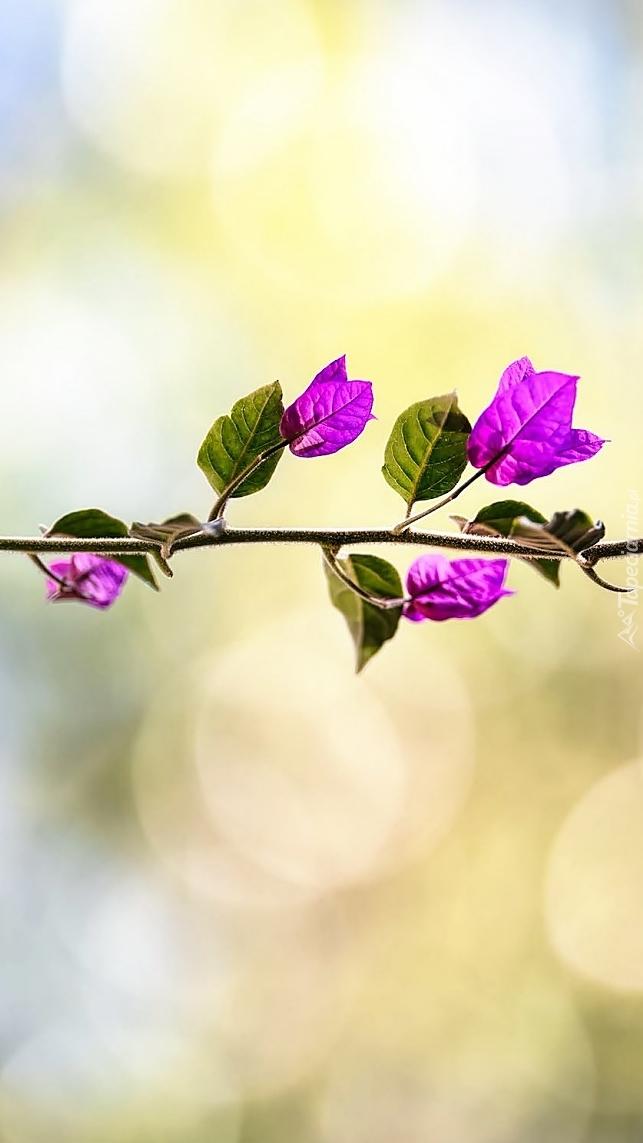 Kwiaty jak liście