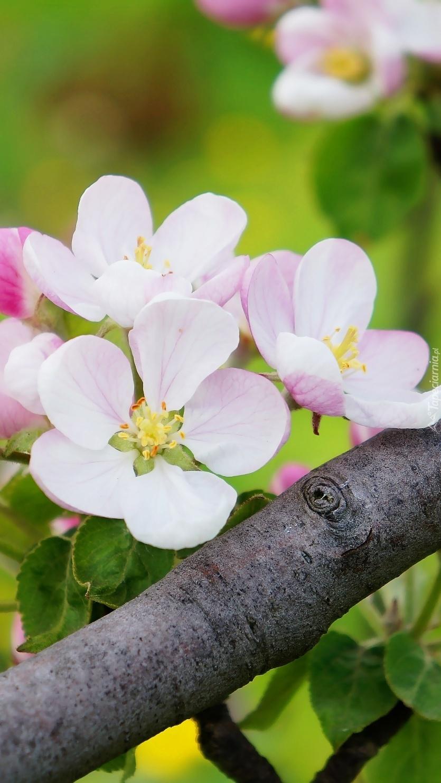 Kwiaty na gałęzi