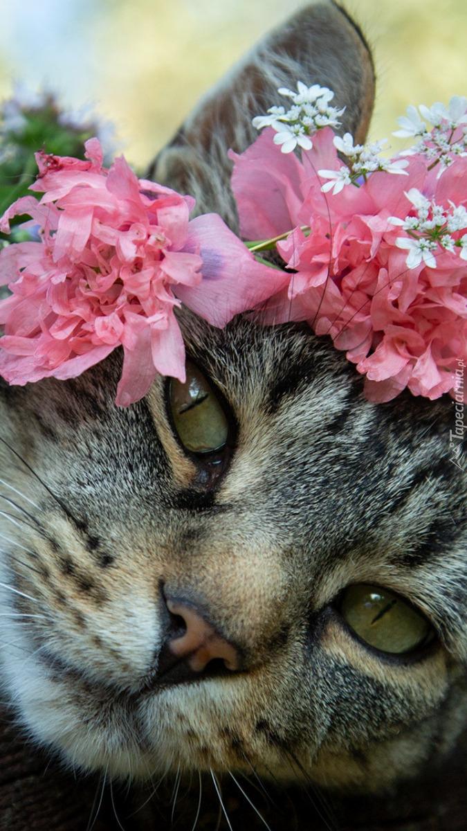 Kwiaty na głowie kota