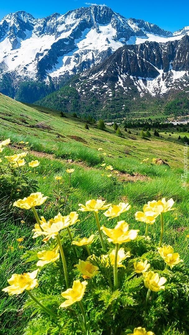 Kwiaty na górskiej łące