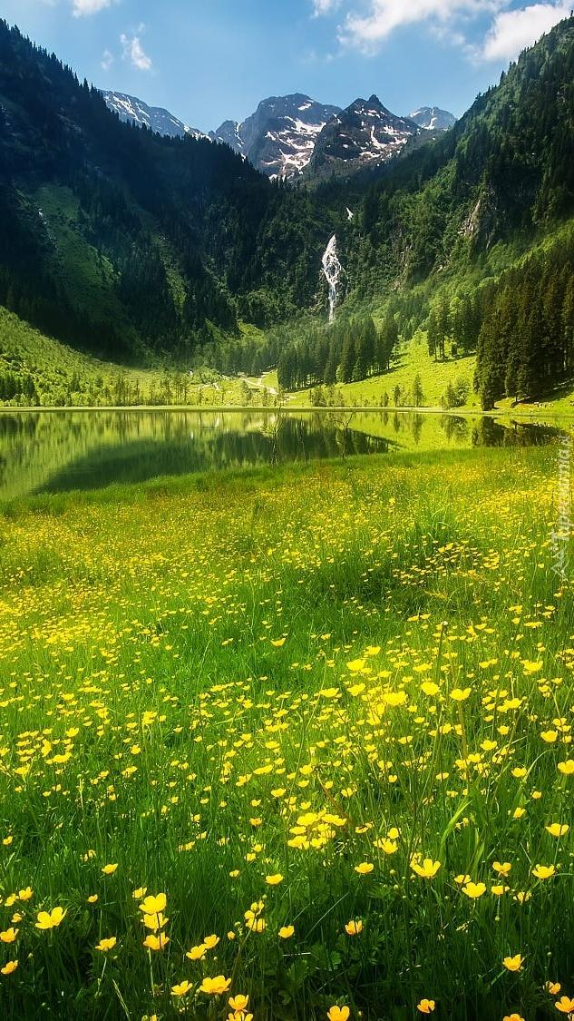 Kwiaty na górskiej łące obok jeziora