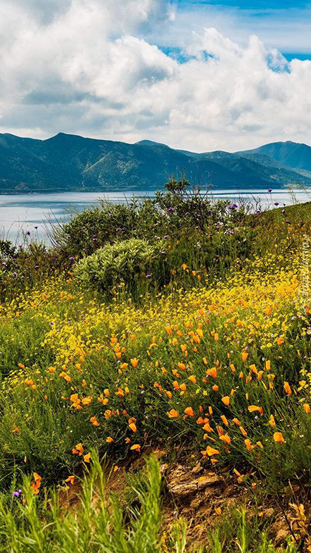 Kwiaty na łące nad jeziorem