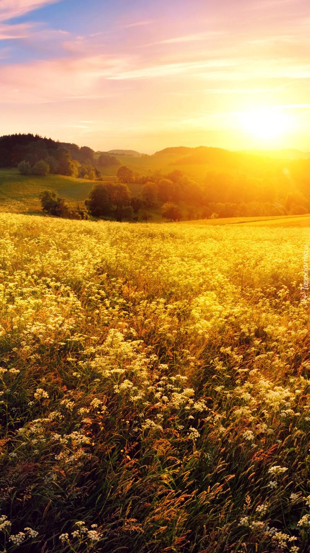Kwiaty na łące w blasku słońca