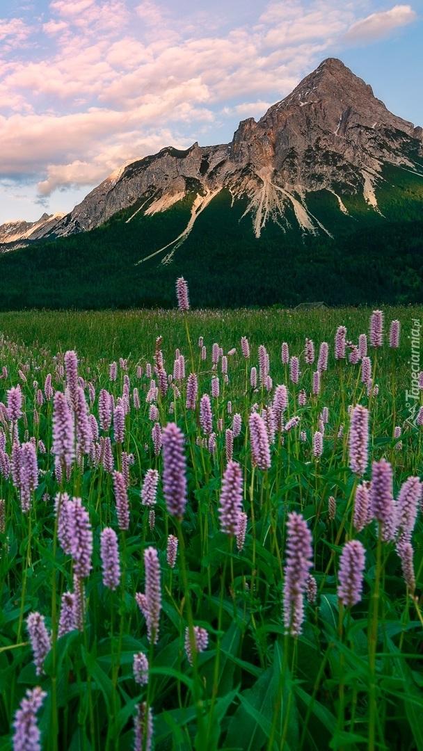 Kwiaty na łące w górach