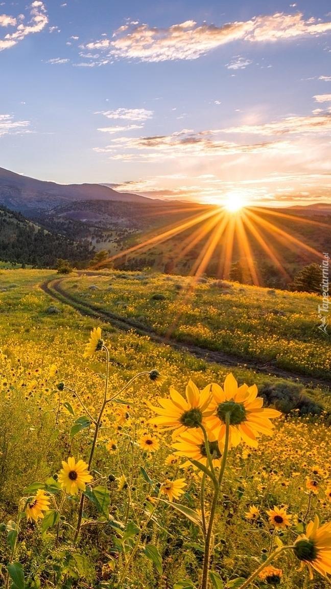 Kwiaty na łące w promieniach słońca