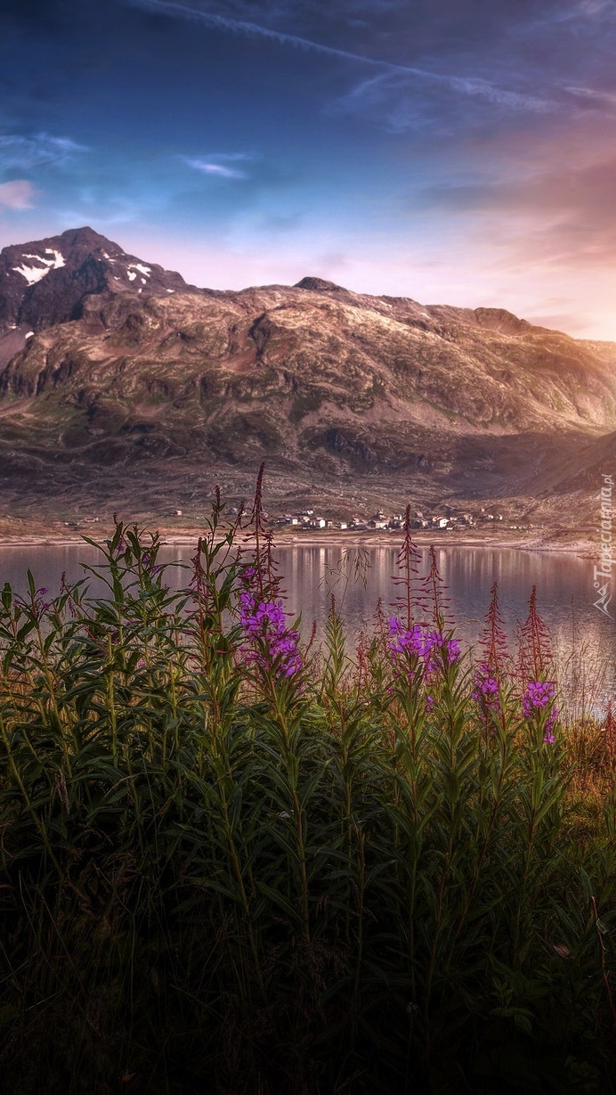 Kwiaty nad jeziorem