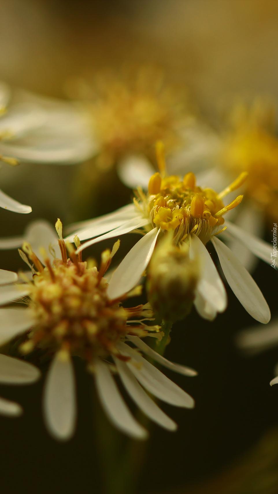 Kwiaty o drobnych płatkach