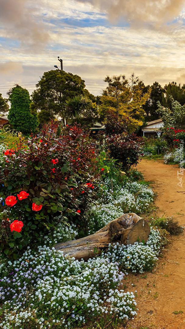 Kwiaty obok ścieżki w ogrodzie