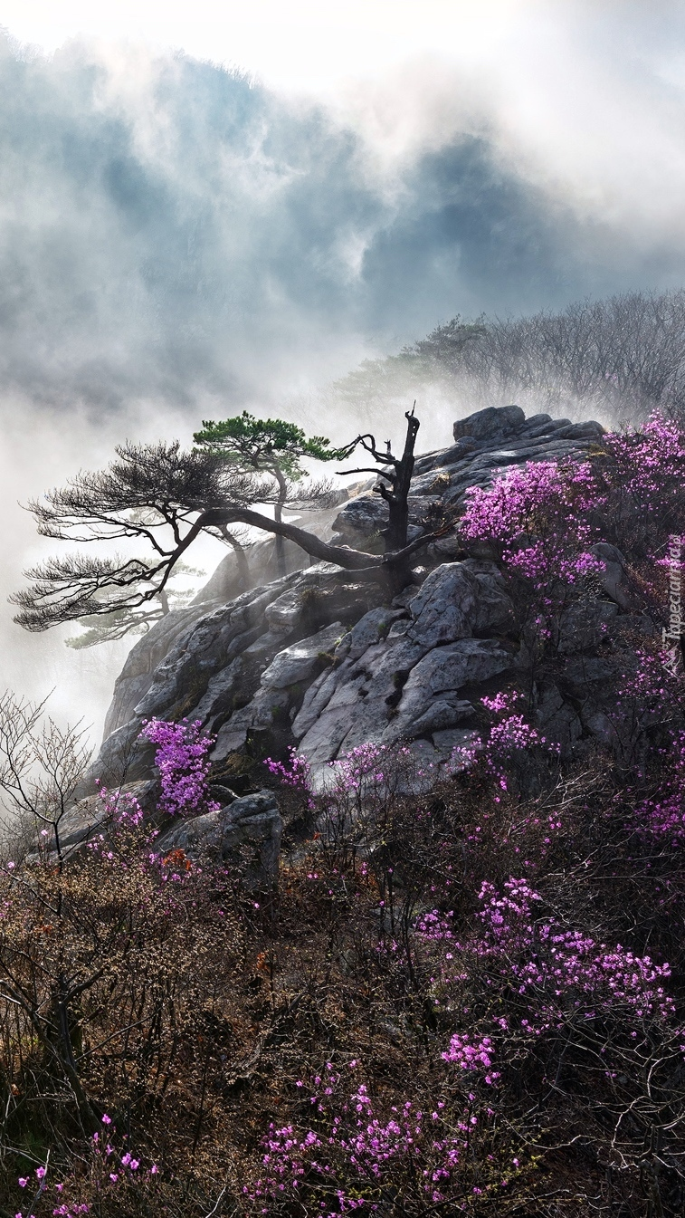 Kwiaty obok skał