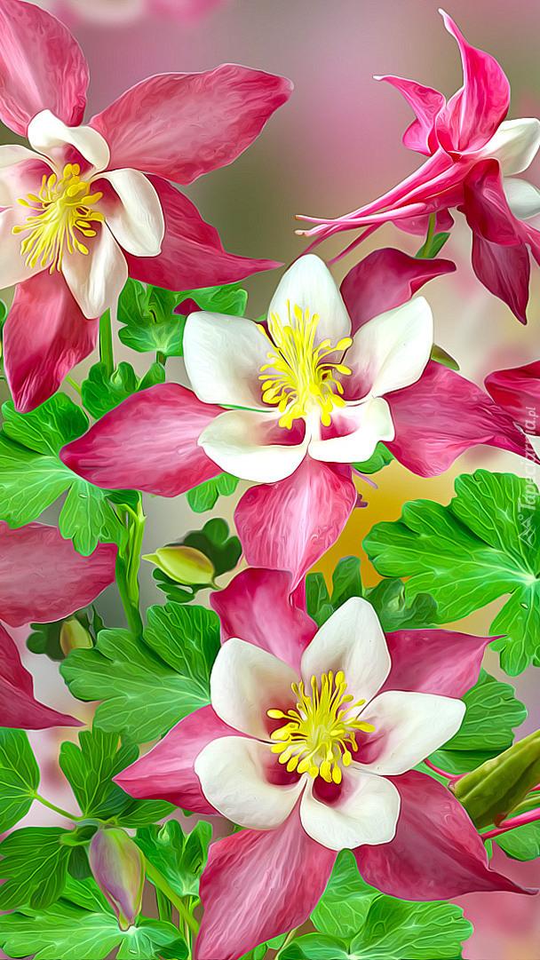 Kwiaty orlika