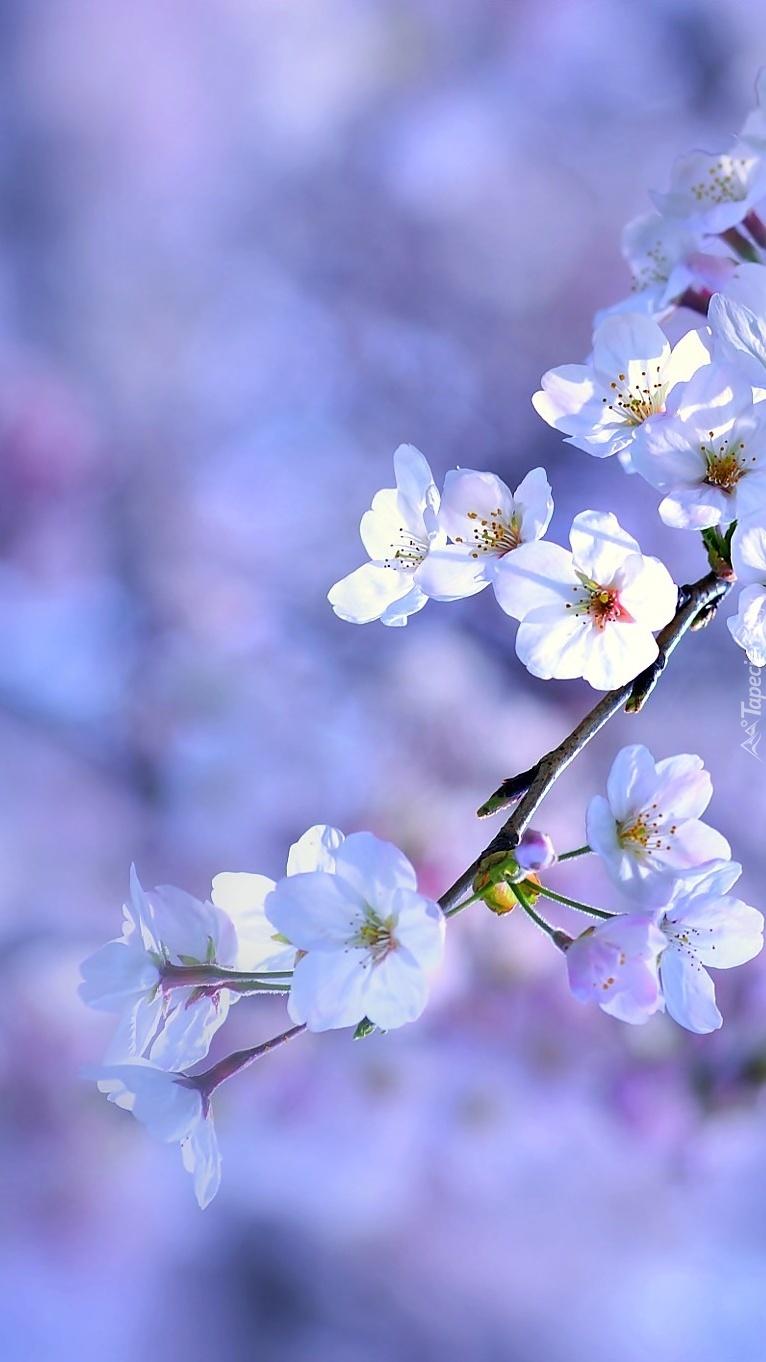 Kwiaty Owocowego Sadu Tapeta Na Telefon