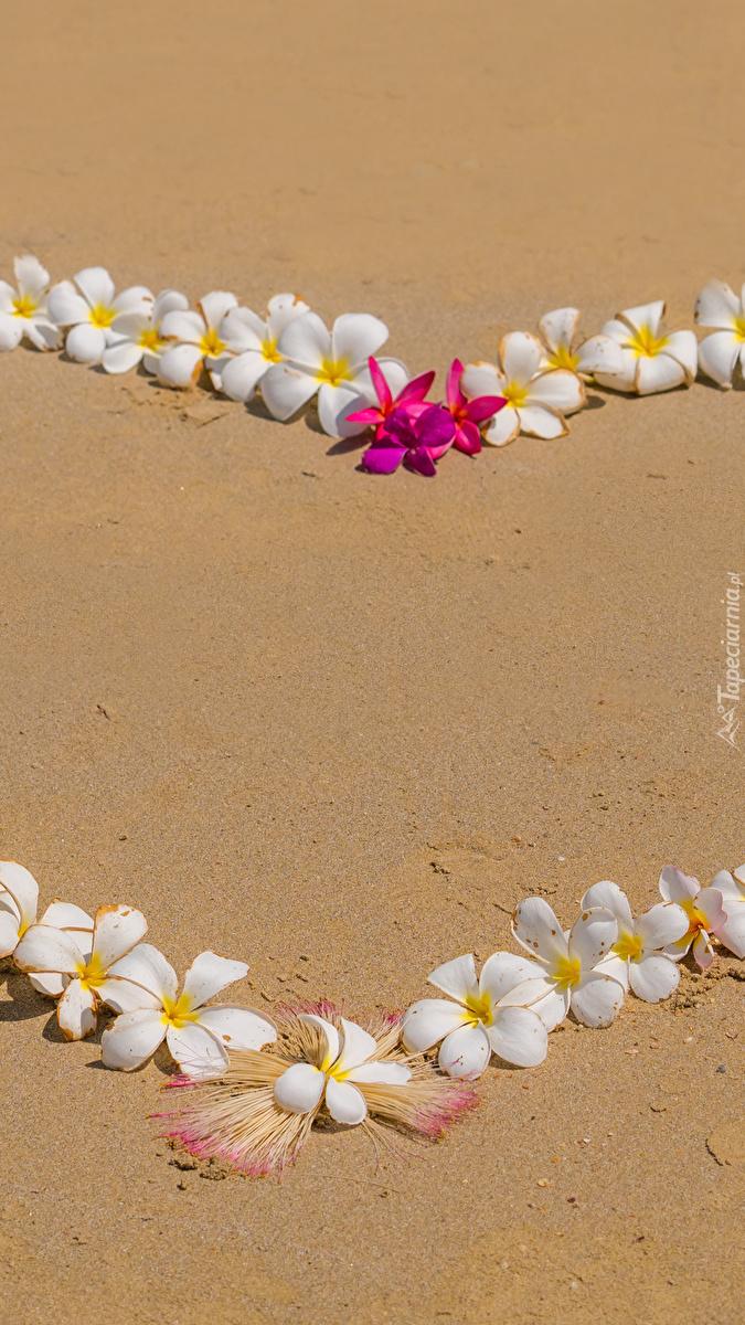 Kwiaty plumerii na piasku