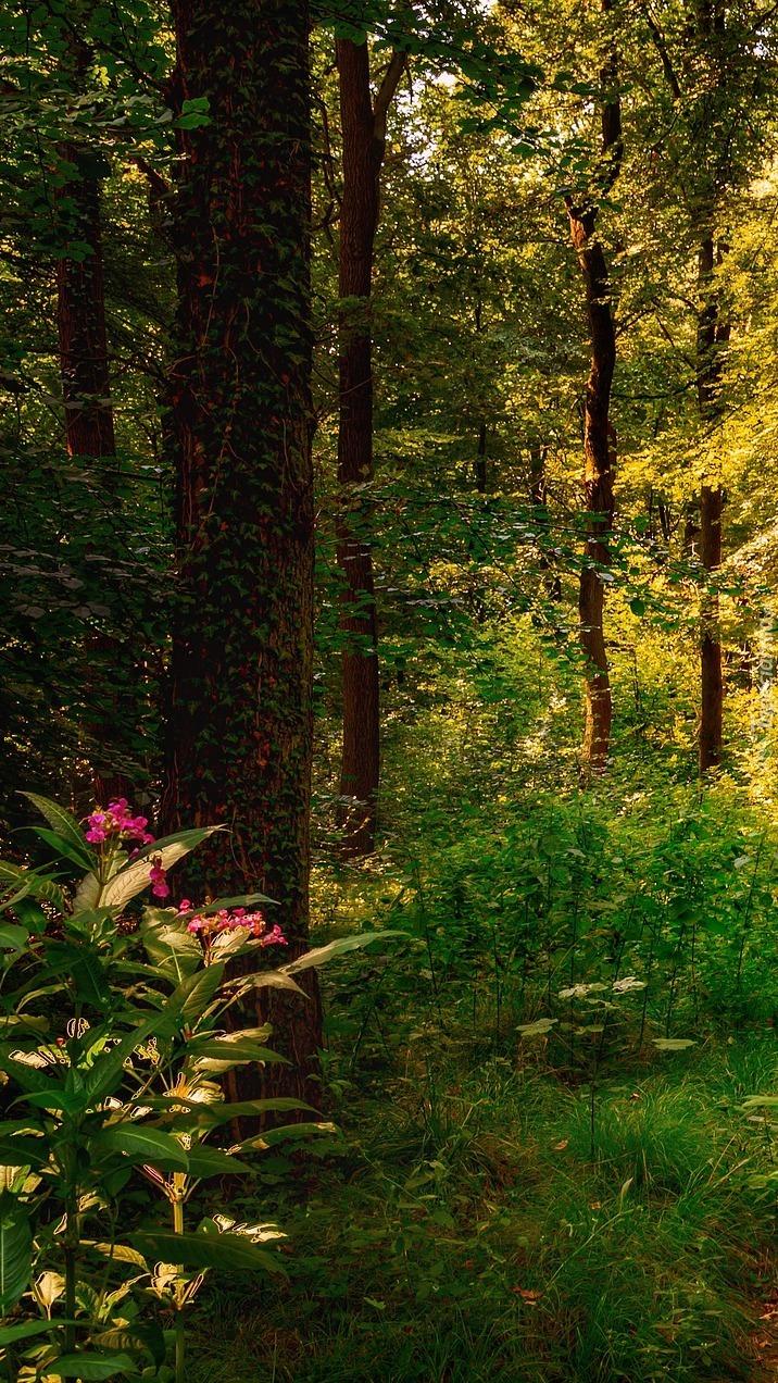 Kwiaty pod drzewami w lesie
