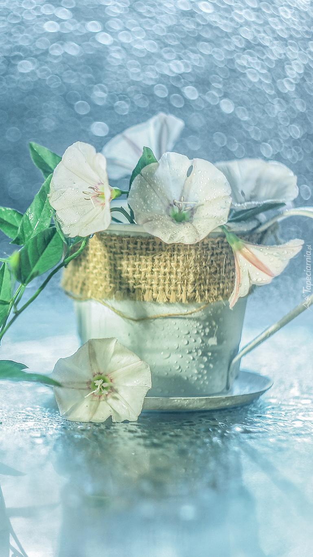 Kwiaty powoju w filiżance