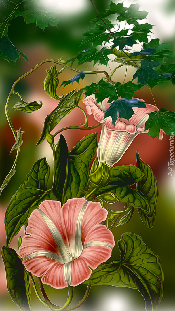 Kwiaty powoju w grafice