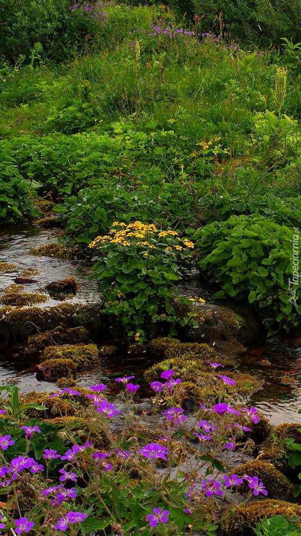 Kwiaty przy kamienistym potoku