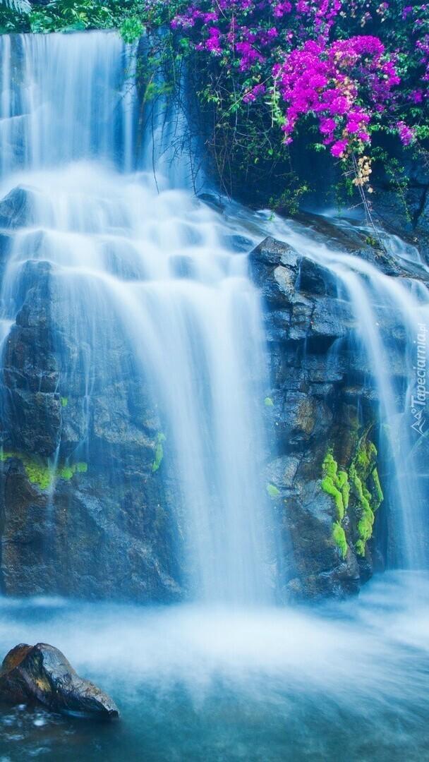 Kwiaty przy skalnym wodospadzie