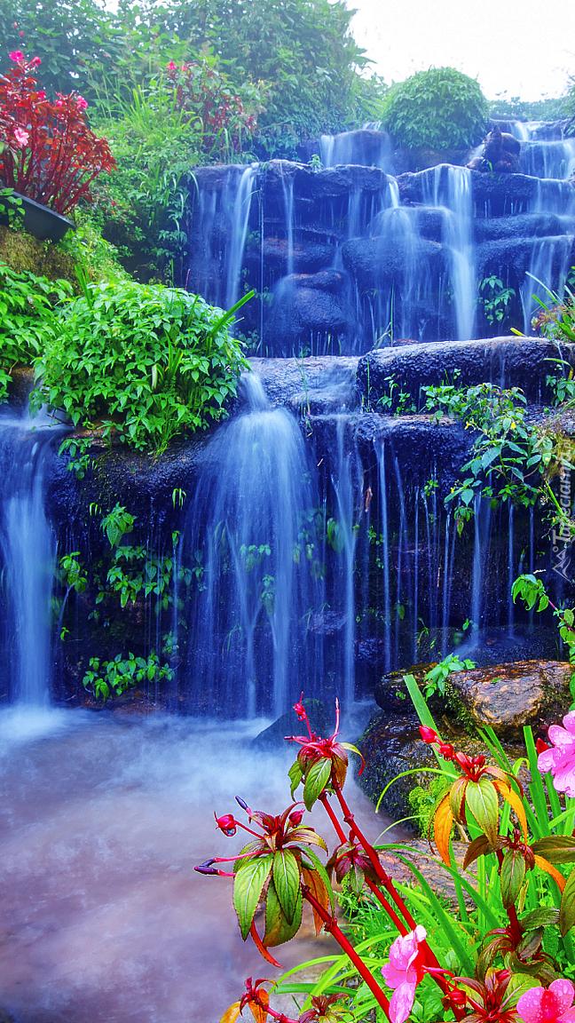 Kwiaty przy wodospadzie
