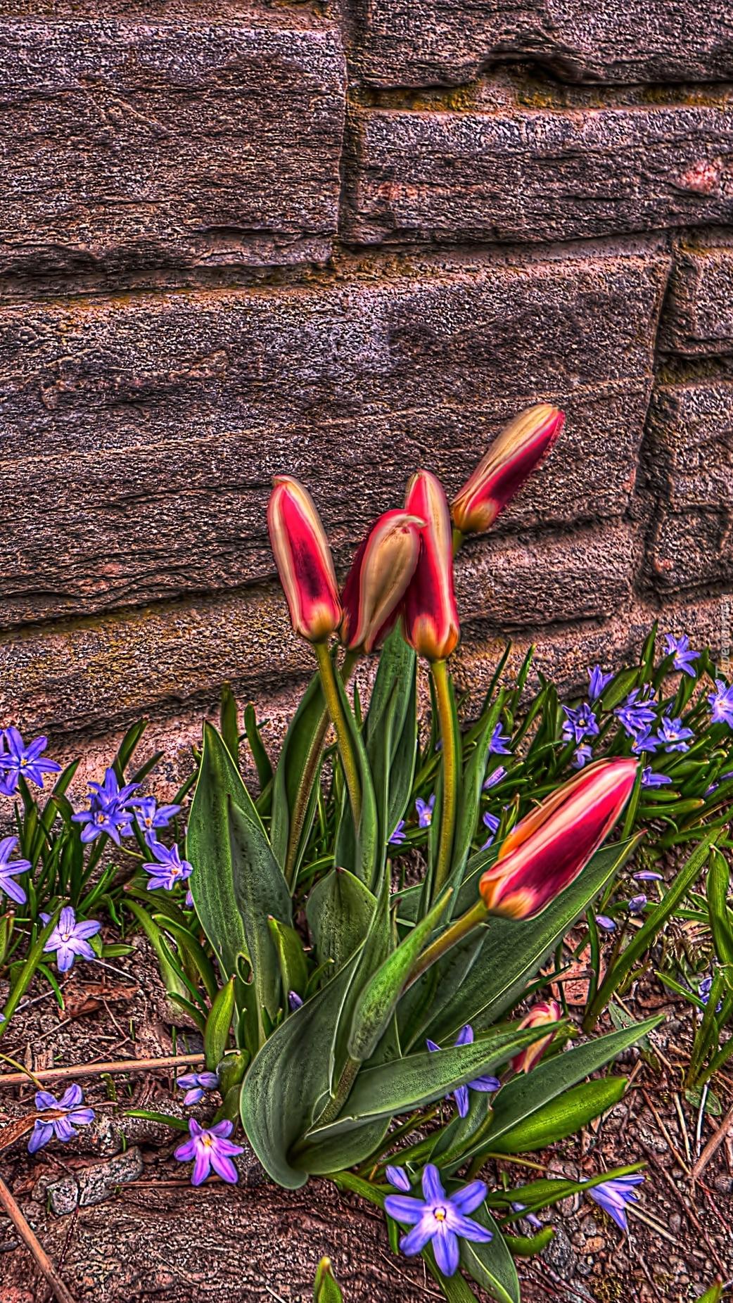 Kwiaty rosnące przy murze