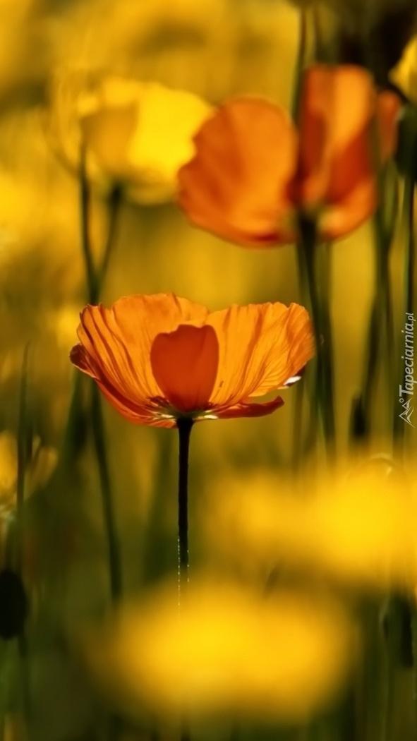 Kwiaty w słońcu