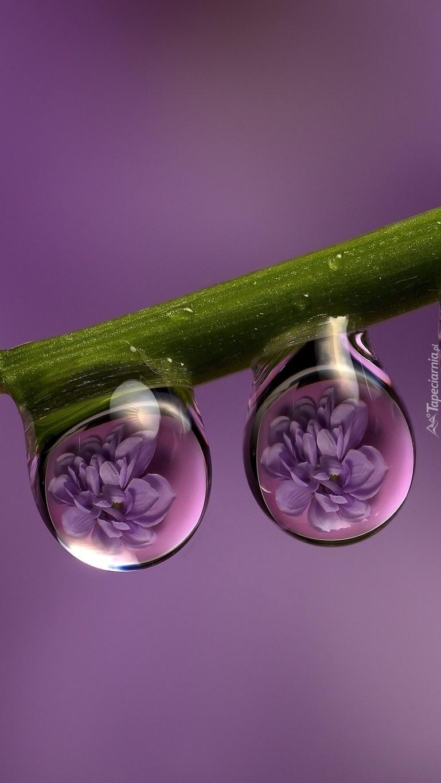 Kwiaty zamknięte w zwisających kroplach