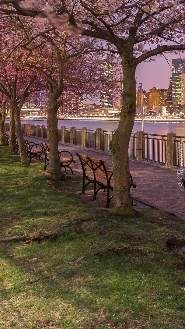 Kwitnące drzewa na promenadzie w Nowym Jorku