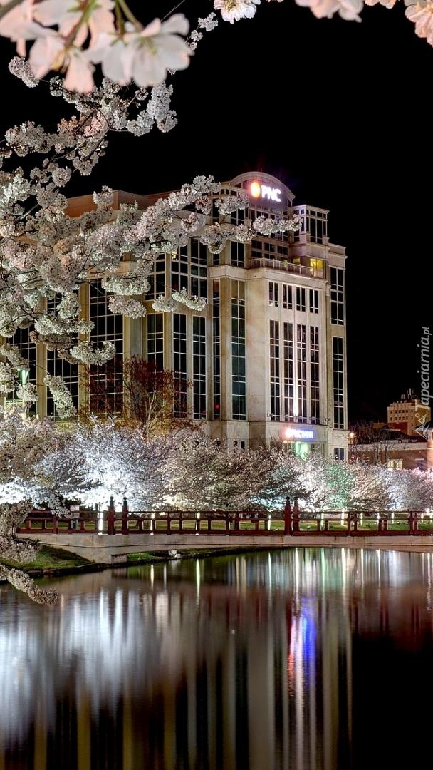 Kwitnące drzewa nad rzeką