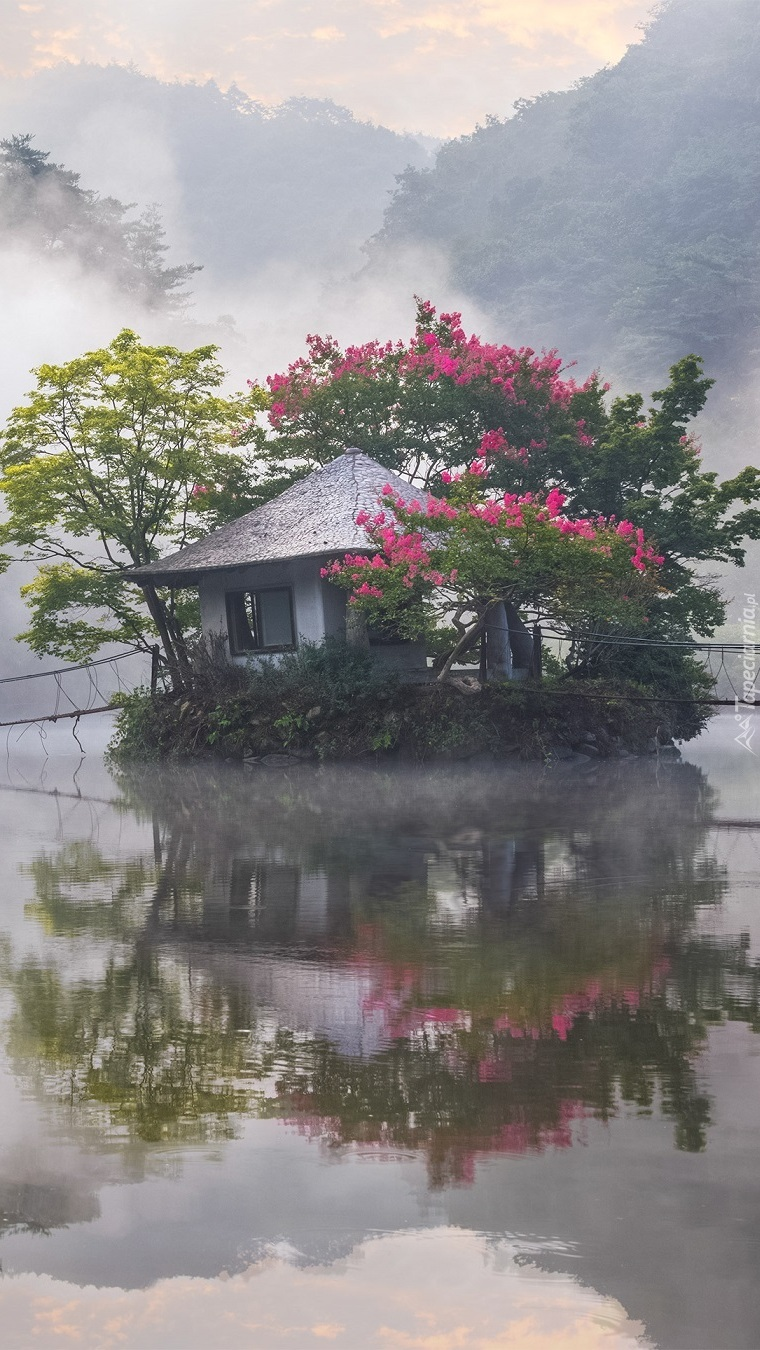 Kwitnące drzewa wokół domku na wodzie