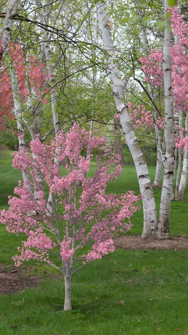 Kwitnące drzewka