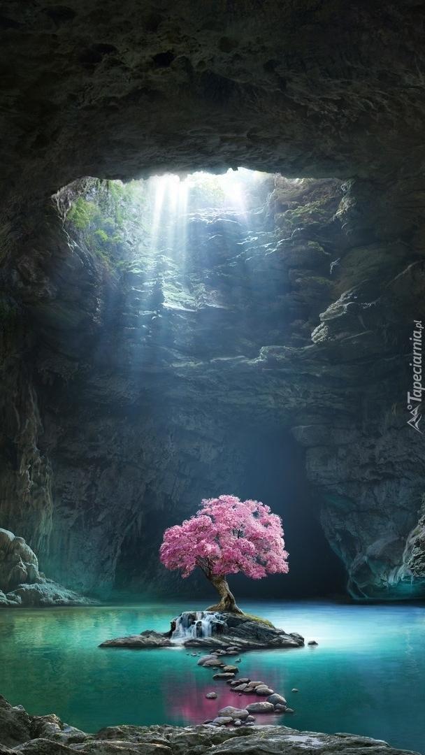 Kwitnące drzewo w jaskini