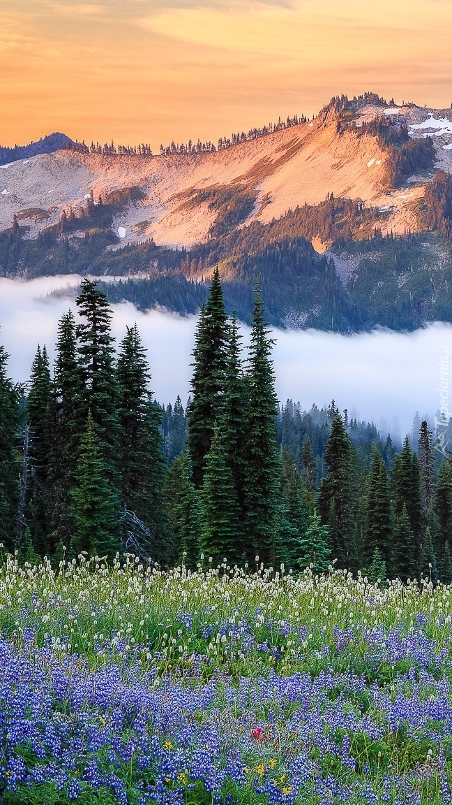 Łąka na tle góry Tatoosh Range