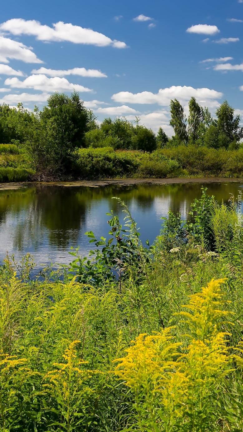 Łąka nad rzeką