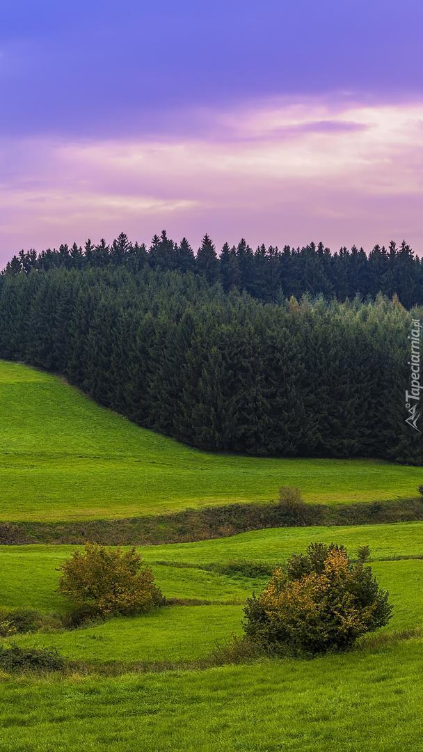 Łąka pod lasem na wzgórzu