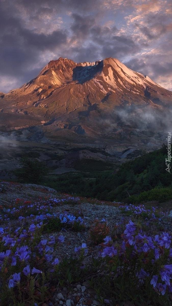 Łąka w górach