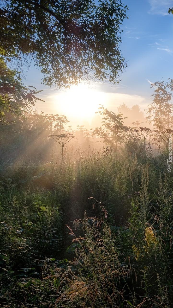 Łąka w promieniach słońca